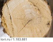Купить «Спиленное дерево», фото № 1183881, снято 28 февраля 2009 г. (c) Вячеслав Рящиков / Фотобанк Лори