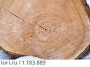 Купить «Спиленное дерево», фото № 1183889, снято 4 марта 2009 г. (c) Вячеслав Рящиков / Фотобанк Лори