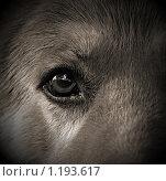 Пес. Стоковое фото, фотограф Антон Коршунов / Фотобанк Лори