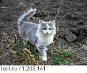Котенок. Стоковое фото, фотограф Ахметова Алина / Фотобанк Лори