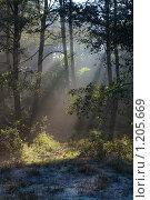 Лучи солнца в лесу. Стоковое фото, фотограф Анатолий Долгополов / Фотобанк Лори