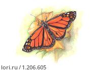 Прекрасная бабочка данаида. Стоковая иллюстрация, иллюстратор Мария Веселова / Фотобанк Лори