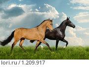 Купить «Две лошади бегут рысью в поле», фото № 1209917, снято 7 ноября 2009 г. (c) Титаренко Елена / Фотобанк Лори