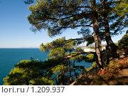 Купить «Пейзаж с соснами с видом на море», фото № 1209937, снято 8 ноября 2009 г. (c) Игорь Архипов / Фотобанк Лори