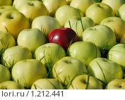 Красный анис   среди антоновских яблок. Стоковое фото, фотограф Юрий Морозов / Фотобанк Лори