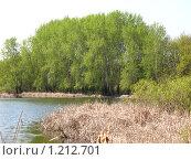 Осиновое озеро. Стоковое фото, фотограф Александр Быков / Фотобанк Лори