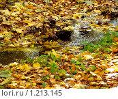 Ручей в осеннем лесу. Стоковое фото, фотограф Ваганова Марина / Фотобанк Лори