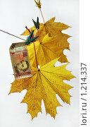 Листы клена и сто гривен. Стоковое фото, фотограф Виталий Гречко / Фотобанк Лори