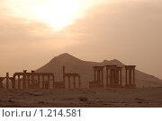 Купить «Пальмира в лучах заката», фото № 1214581, снято 26 октября 2009 г. (c) Maria Kuryleva / Фотобанк Лори