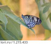 Бабочка на цветке. Стоковое фото, фотограф Persiyantsev Nick / Фотобанк Лори