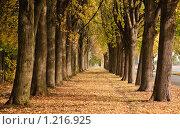 Липовая аллея осенью. Стоковое фото, фотограф Алёшина Оксана / Фотобанк Лори