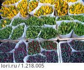 Голландия.амстердам.цветочный рынок.тюльпаны (2008 год). Стоковое фото, фотограф Екатерина Петрухина / Фотобанк Лори