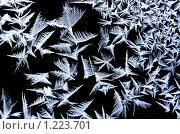 Купить «Ледяной узор на стекле», фото № 1223701, снято 31 января 2009 г. (c) ElenArt / Фотобанк Лори