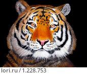 Купить «Рисунок - тигр на черном фоне», иллюстрация № 1228753 (c) Евгений / Фотобанк Лори