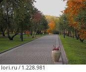 Аллея в Коломенском (2009 год). Редакционное фото, фотограф Анатолий Сверчков / Фотобанк Лори