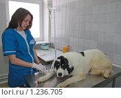 Купить «Ветеринарный врач ставит капельницу собаке», фото № 1236705, снято 26 мая 2009 г. (c) Галина Бурцева / Фотобанк Лори