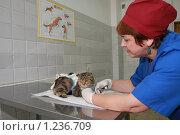 Купить «Женщина-ветеринар обрезает когти у кошки», фото № 1236709, снято 8 июля 2009 г. (c) Галина Бурцева / Фотобанк Лори