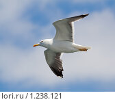 Купить «Полет чайки на фоне неба с облаками», фото № 1238121, снято 11 июля 2009 г. (c) Петр Кириллов / Фотобанк Лори