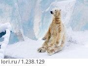 Купить «Полярный медведь», фото № 1238129, снято 7 февраля 2009 г. (c) Петр Кириллов / Фотобанк Лори
