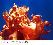 Купить «Оранжевые водоросли в воде», фото № 1238645, снято 1 января 2008 г. (c) Александр Кузовлев / Фотобанк Лори
