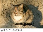 Жмурящийся на солнце кот. Стоковое фото, фотограф Виктор Пашин / Фотобанк Лори