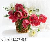 Купить «Большой букет тюльпанов в корзинке с ветками лиственницы», фото № 1257689, снято 11 мая 2009 г. (c) Елена Завитаева / Фотобанк Лори