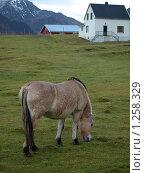 Лошадь породы Норвежский фьорд (2009 год). Стоковое фото, фотограф Зоя Степанова / Фотобанк Лори