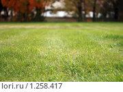 Осенний газон. Стоковое фото, фотограф Диана Карлова / Фотобанк Лори