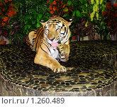 Купить «Тигр умывается», фото № 1260489, снято 16 августа 2018 г. (c) Анжелика Самсонова / Фотобанк Лори
