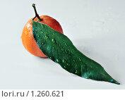 Мандарин и зеленый лист с каплями. Стоковое фото, фотограф Виталий Гречко / Фотобанк Лори