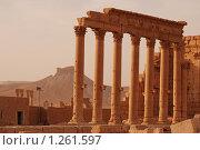Купить «Сирия. Пальмира. Древний храм и вид на замок», фото № 1261597, снято 26 октября 2009 г. (c) Maria Kuryleva / Фотобанк Лори