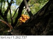 Царство грибов. Стоковое фото, фотограф Евгения Никифорова / Фотобанк Лори