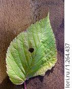 Купить «Листок», фото № 1264437, снято 4 ноября 2008 г. (c) Молодкин Михаил Владимирович / Фотобанк Лори
