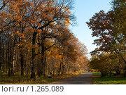 Купить «Аллея», фото № 1265089, снято 18 октября 2009 г. (c) Роман Мухин / Фотобанк Лори
