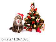 Купить «Кот в новогоднем колпаке сидит около новогодней ёлкой. Год Кота.», фото № 1267085, снято 5 декабря 2009 г. (c) Ирина Карлова / Фотобанк Лори
