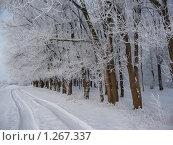 Зимняя дорога. Стоковое фото, фотограф Вера Сидиропуло / Фотобанк Лори