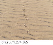 Следы на песке. Стоковое фото, фотограф Ирина Кувшинова / Фотобанк Лори
