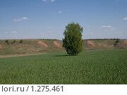 Купить «Одна в поле...», фото № 1275461, снято 23 мая 2009 г. (c) Пудов Павел / Фотобанк Лори