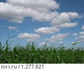 Густые заросли осоки на фоне неба. Стоковое фото, фотограф Моисеева Галина / Фотобанк Лори