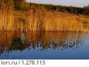 Заводь в парке. Стоковое фото, фотограф Евгения Никифорова / Фотобанк Лори