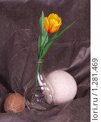 Купить «Натюрморт», фото № 1281469, снято 11 декабря 2009 г. (c) Алешина Екатерина / Фотобанк Лори