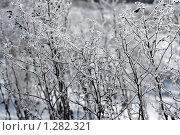 Полынь в инее. Стоковое фото, фотограф Гуньков Валерий Анатольевич / Фотобанк Лори