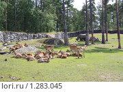 Зоопарк Кольморден (2009 год). Стоковое фото, фотограф Татьяна Шишкова / Фотобанк Лори