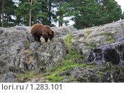 Медведь. Стоковое фото, фотограф Татьяна Шишкова / Фотобанк Лори