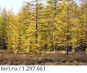 Осень в тайге. Стоковое фото, фотограф Таир Сейтхалилов / Фотобанк Лори