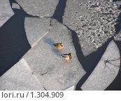 Купить «Утки на льду», эксклюзивное фото № 1304909, снято 5 февраля 2009 г. (c) lana1501 / Фотобанк Лори