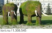 """Ландшафтный дизайн """"Слоны"""" (2009 год). Редакционное фото, фотограф Юлия Бобер / Фотобанк Лори"""