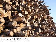 Купить «Заготовка древесины», фото № 1311413, снято 19 августа 2009 г. (c) Илья Телегин / Фотобанк Лори