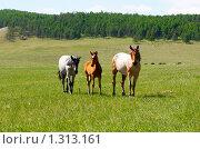 Лошадиная семья. Стоковое фото, фотограф Храпова Марина / Фотобанк Лори