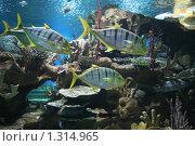 Купить «Экзотические рыбы в Океанариуме», фото № 1314965, снято 26 сентября 2009 г. (c) Александр Секретарев / Фотобанк Лори